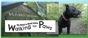 the fantastic Wimbledon puppy Walk- Walking for Paws