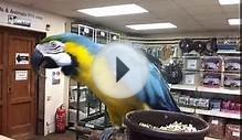 """Mac the Parrot"" dancing to The Wombles song"