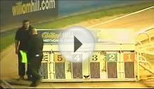 Roxholme Dream - 480 Ladies Final - Wimbledon Greyhound