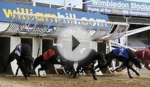 The dogs need to bite back! Wimbledon greyhound stadium